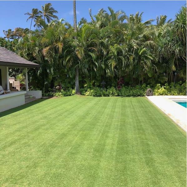 Image of beautiful lawn