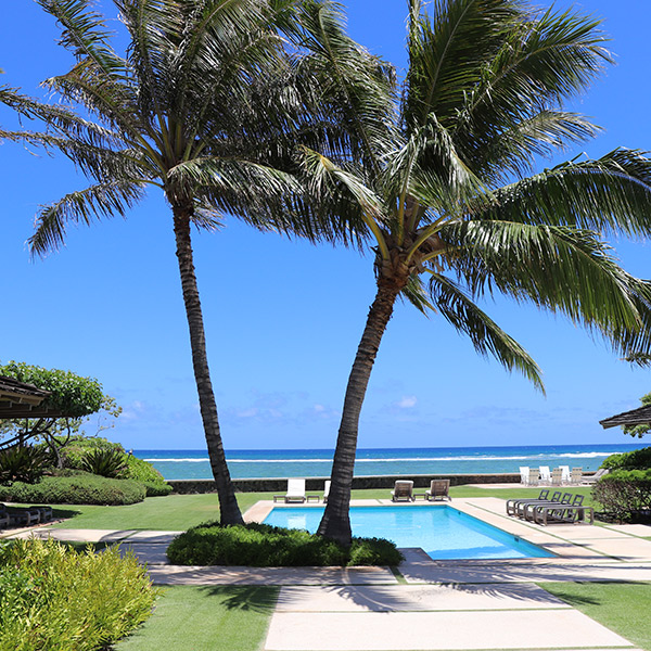 image of palm trees above pool with well-manicured lawn
