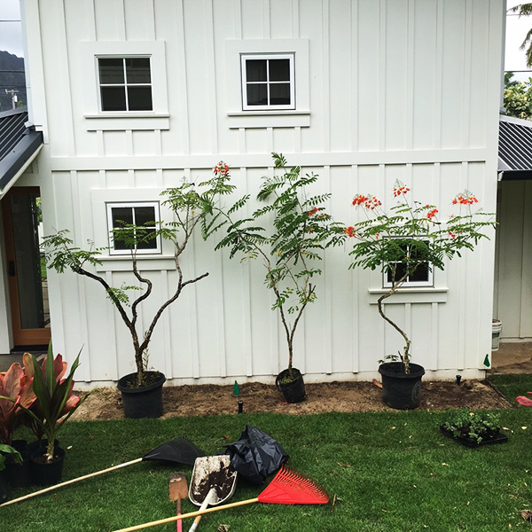 Image of yard tools near new trees being planted