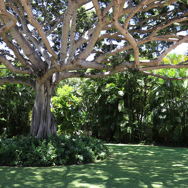 Image of tree in well-manicured yard